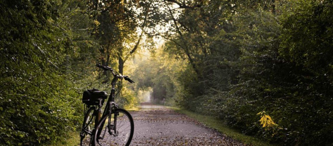 Alquiler de bicis tenerife vanilla garden